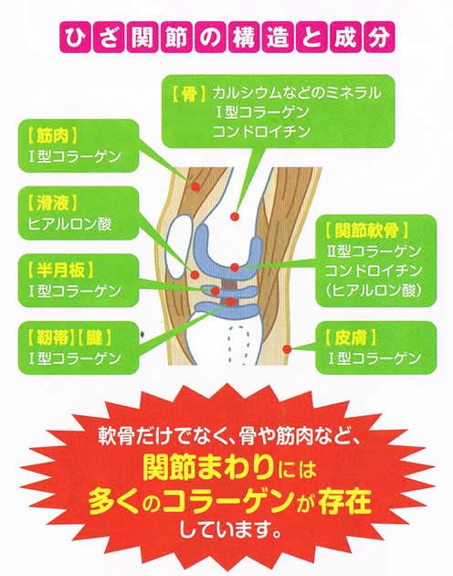 ひざ関節の構造と成分